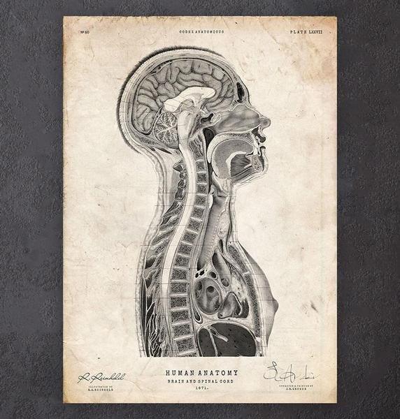 retro anatomi i genomskärning